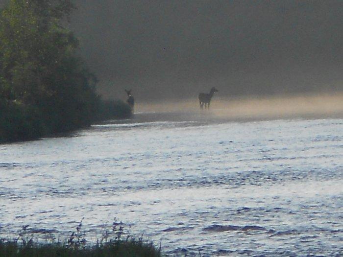 Утром на водопое