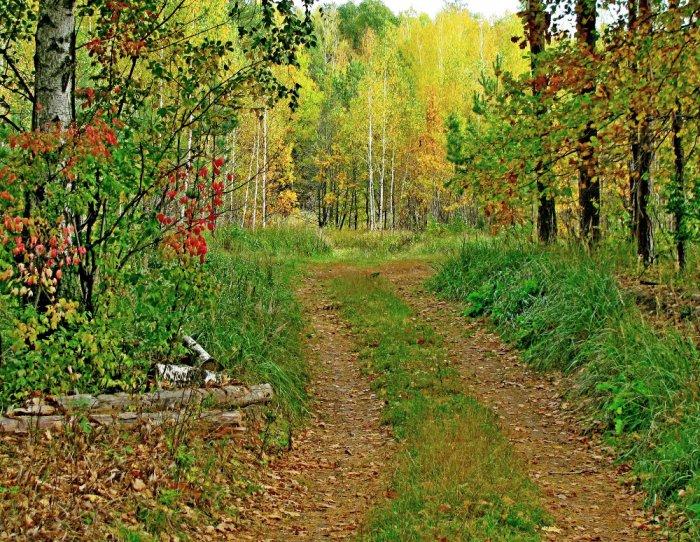 Осень в центральной полосе