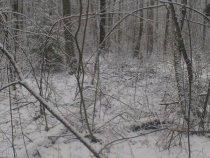 Пришла зима и к нам.Тверская область.