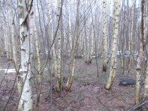 11 января, зимой не пахнет в Московской области