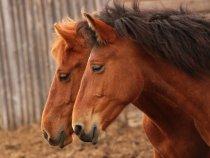 С годом лошади