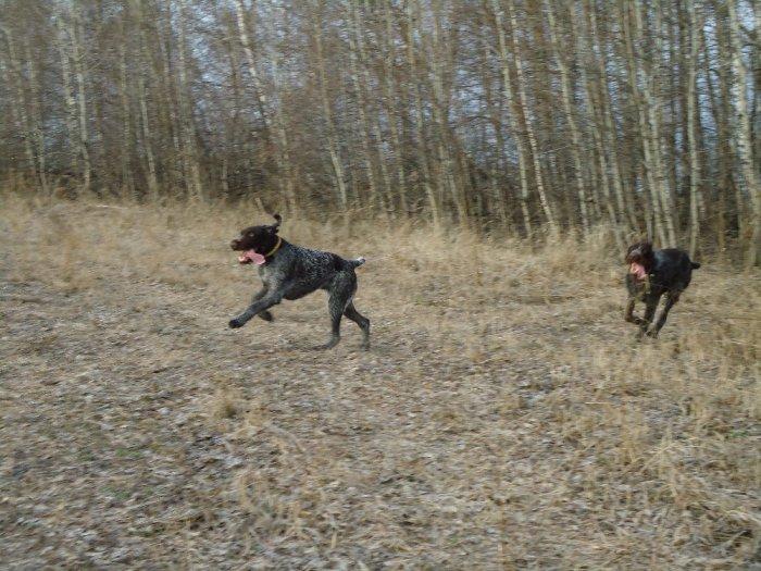 Тайра и Реси на прогулке
