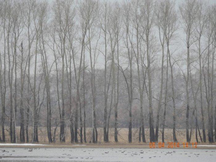 Алейский район весна 5.04.2014