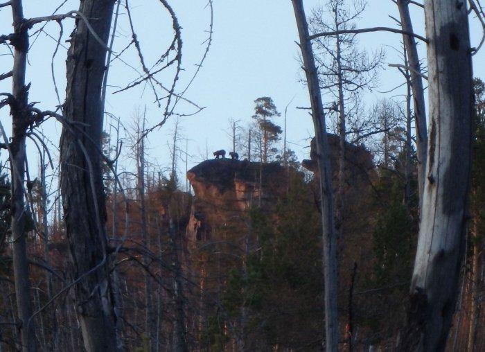 Медведи на скальнике