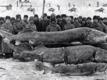 Волга, 1924 год. Вот какие гиганты водились...