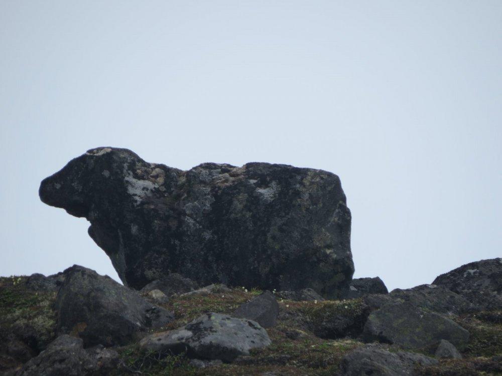 """камень""""овечка Долли"""")))"""