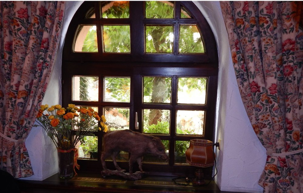 Окно в природу.