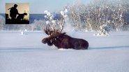 Секреты успешной охоты на лося