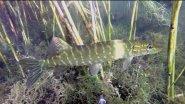 подводная охота под солнцем на озере