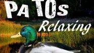 расслабляющая утка