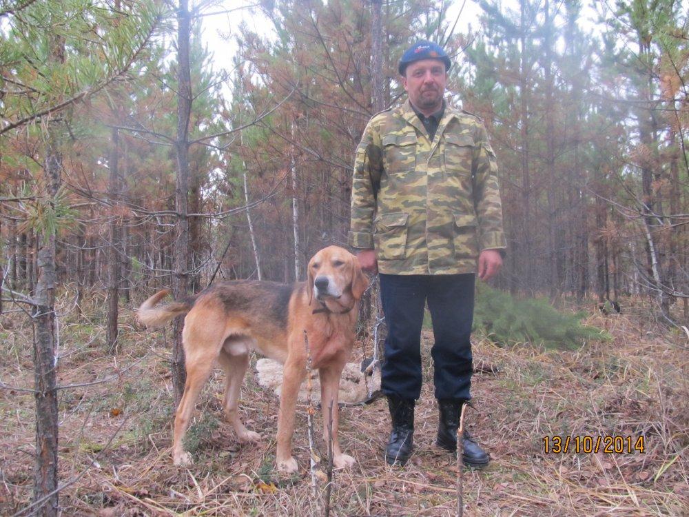 Алтайские региональные открытые состязания гончих по З/Б.