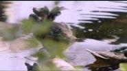 Необычный документальный фильм про уток