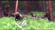 Медведь напал на охотников смотреть до конца!