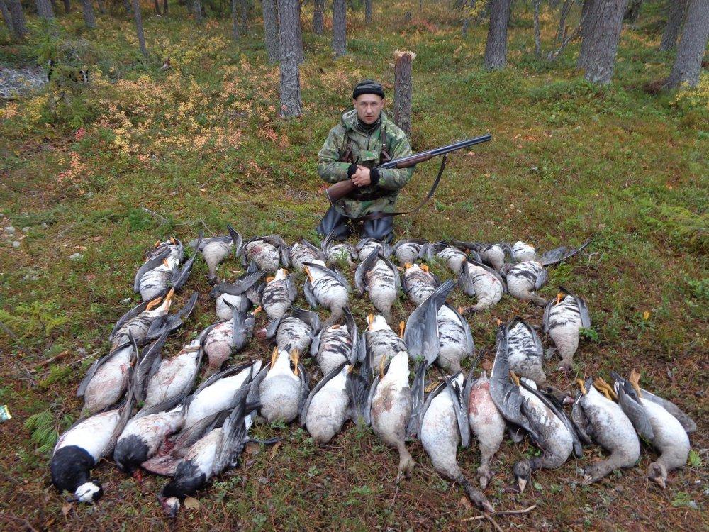 Последний день охоты на гуся!