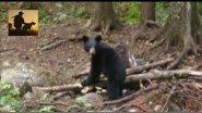 Охочусь с сыном на медведя.