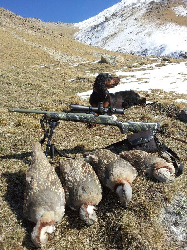 Альфа на охоте