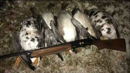 Охота на гуся и утку на болоте