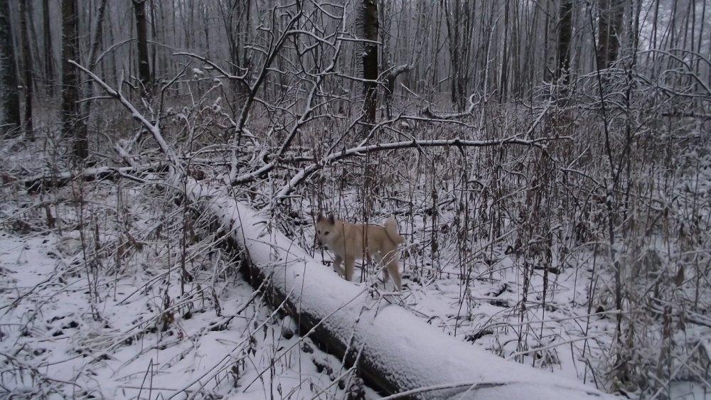мой помощник в лесу