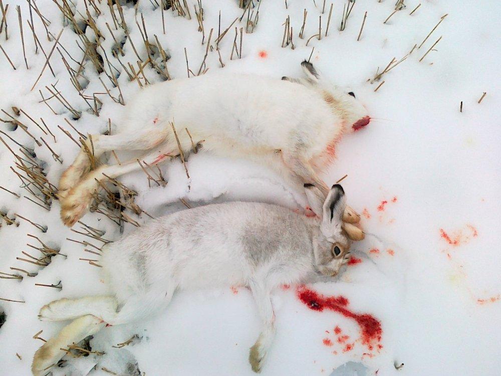 Открытие 2014. 3 и 4 зайцы