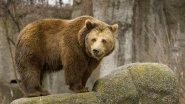 Охота на медведя берлога (удачная охота) Bear Hunt