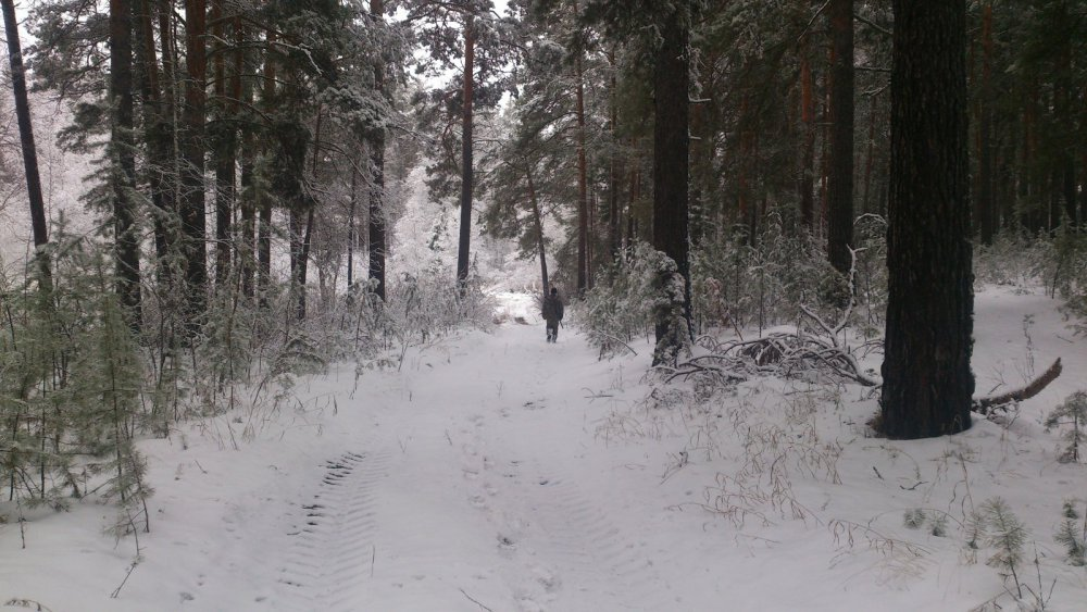 Субботняя по лесу....