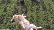 Охота на зайца.