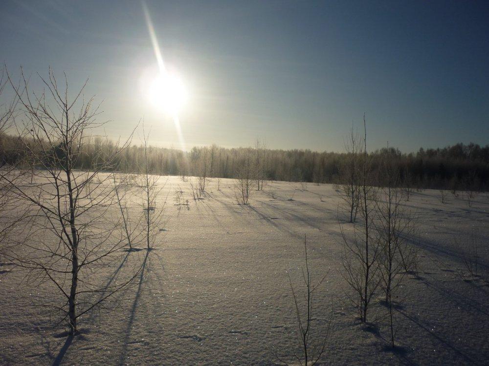 Красота зимнего леса.