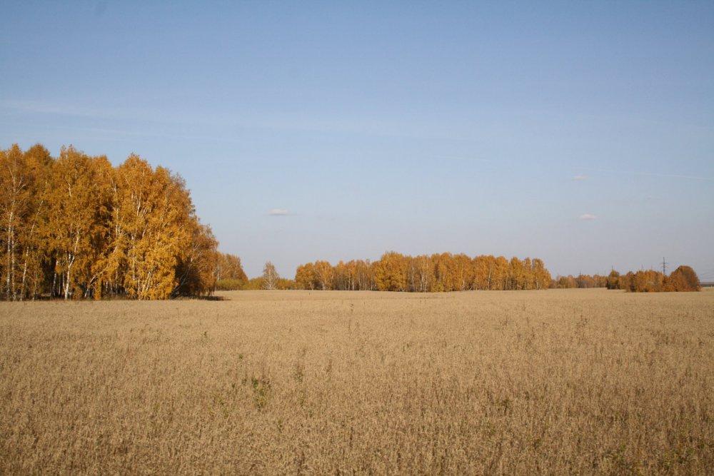 Вспомнилась осень....
