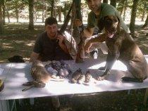 Заяц, перепелка, черок и голубь в один день )))