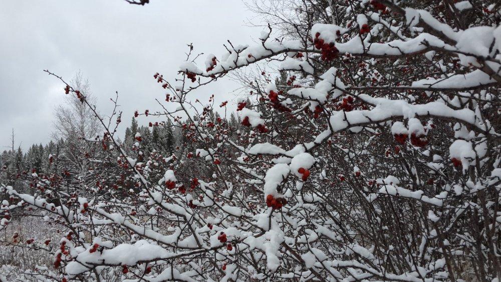 первый снег 2