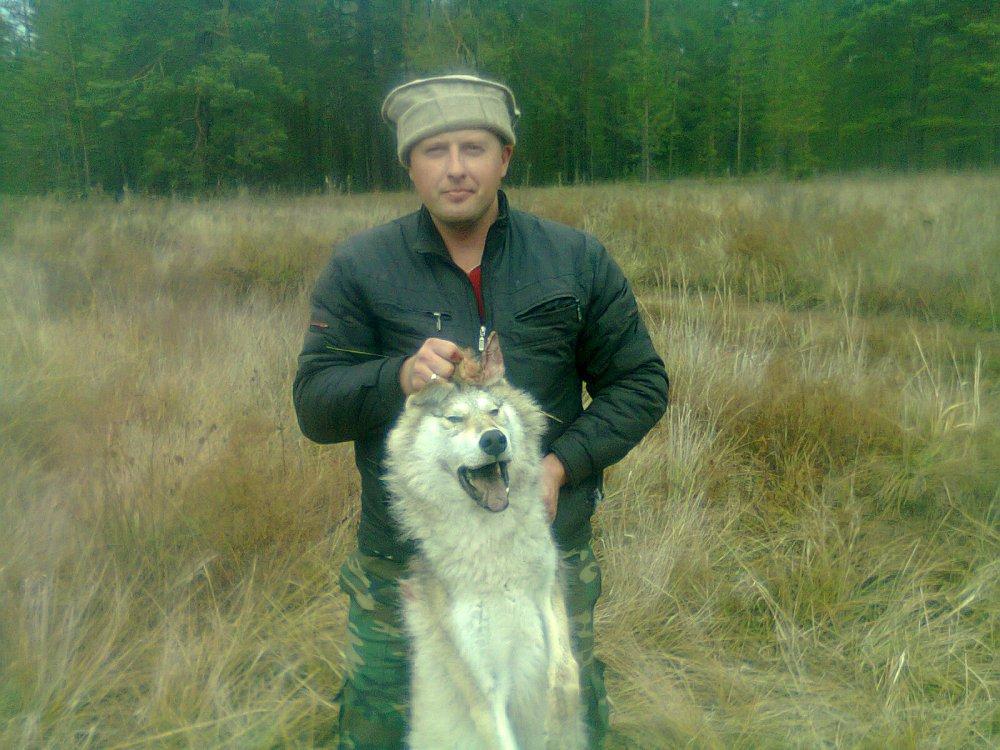 Волчица.2013год