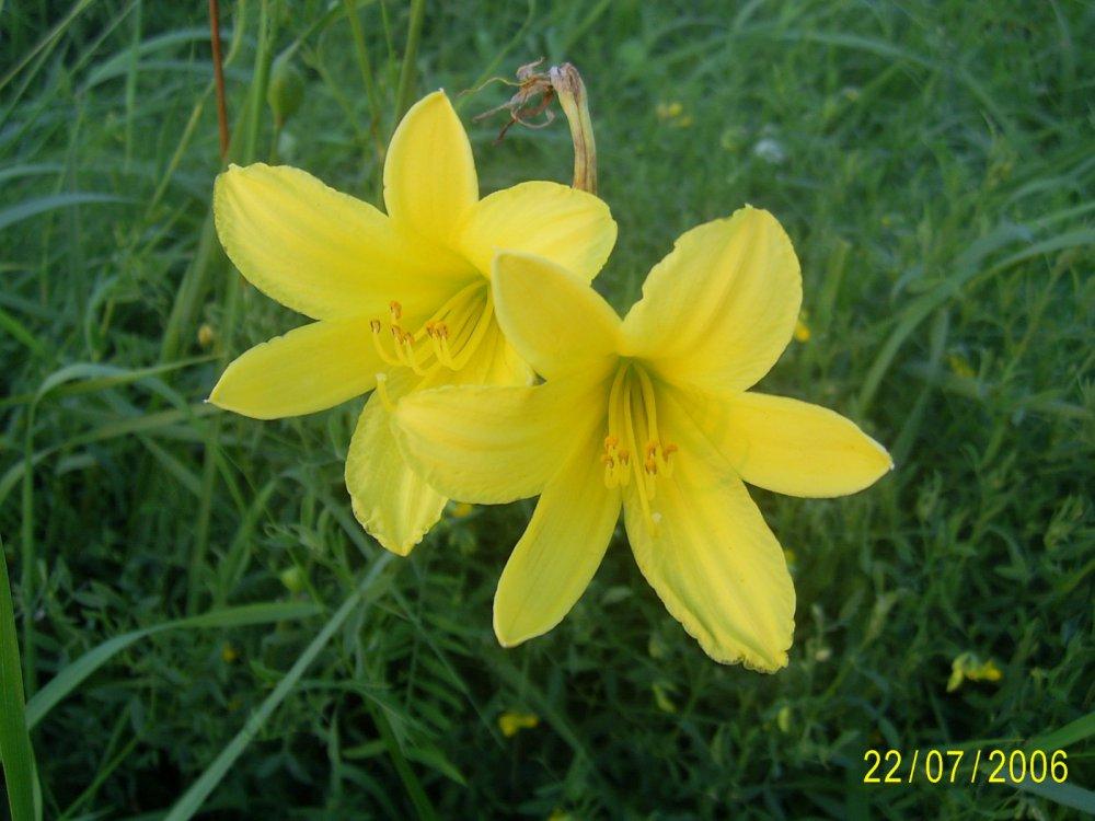 цветы пойменных лугов