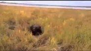 Охота на медведя. Якутия