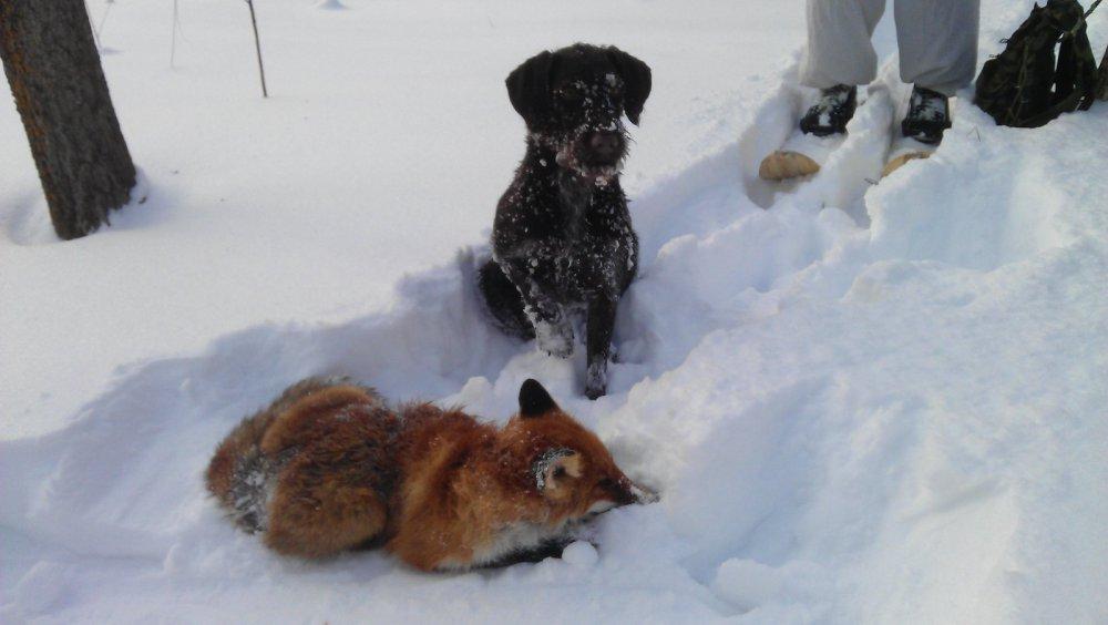 Подавать плутовку в снегу было тяжко )))