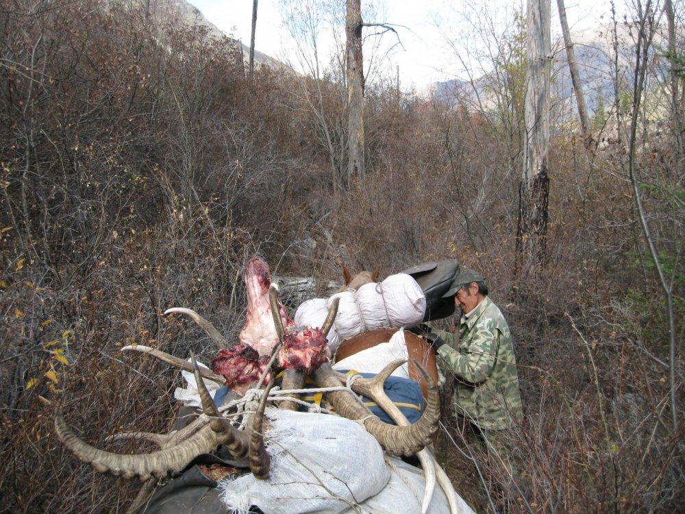 Программа охоты выполнена