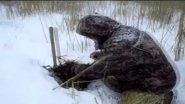 Ловля ондатры капканами зимой.Охота на ондатру в Омской области. Trapping muskrat