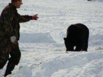 Медведь, октябрь.