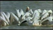 Птицы на перелете.Красивое видео.