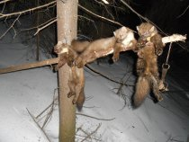 Закрылся по леснухе 28.02.2015г