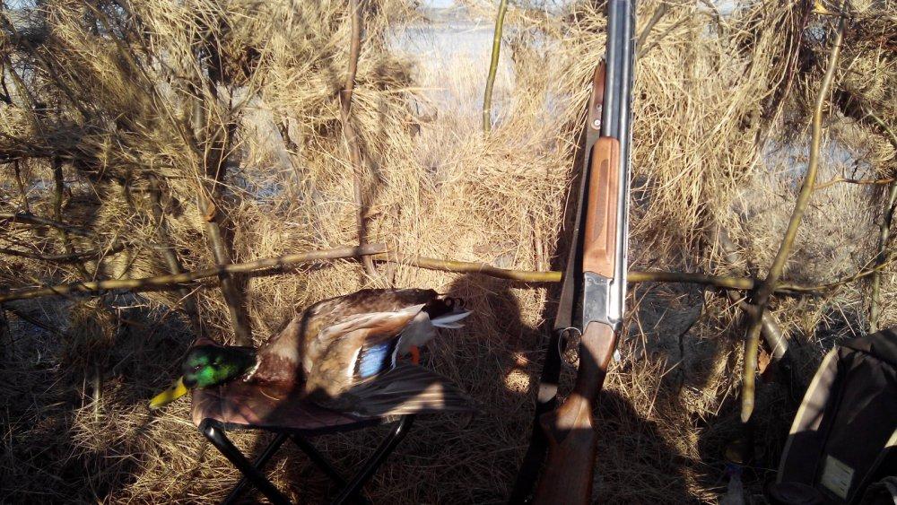 Открытие охоты 2015год.