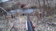 Охота на бобра 20 кг