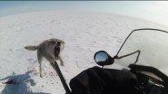 Степные охотники 4 2. Охота на волка.