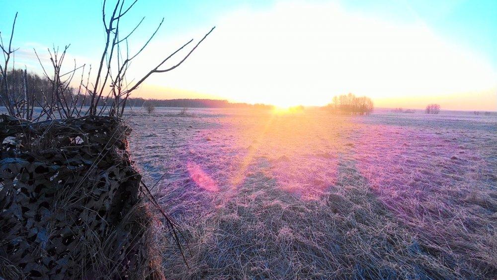 Морозное утро на току....