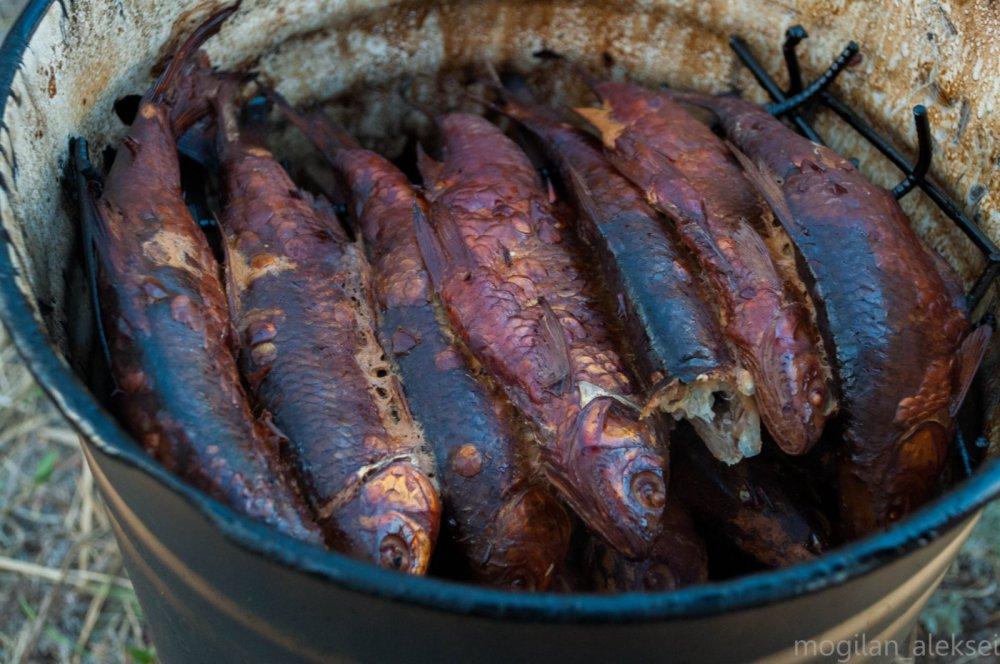 чебак горячего копчения в ведре