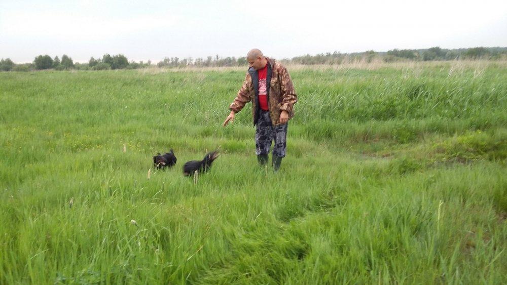 Гуляем по полям