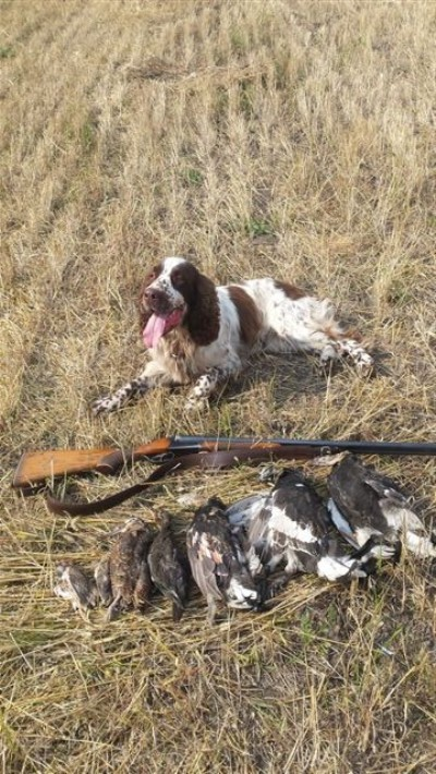 Охота с собакой это эстетическое удовольствие.