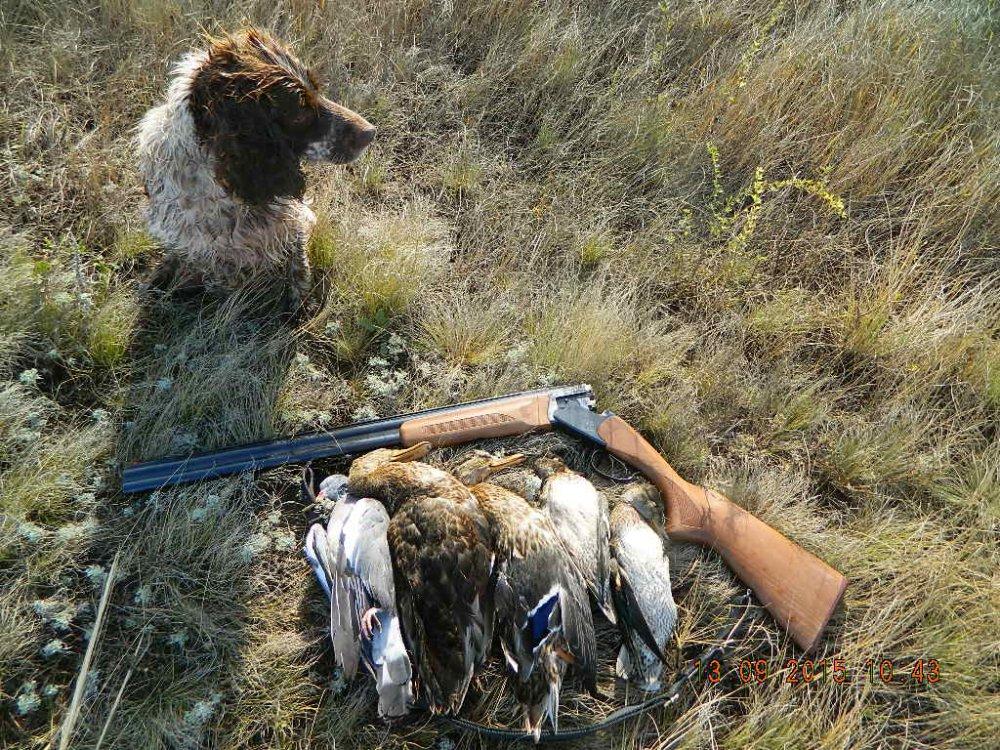 Ходовая охота с Чапой