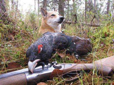 Лучшие способы охоты на глухаря осенью