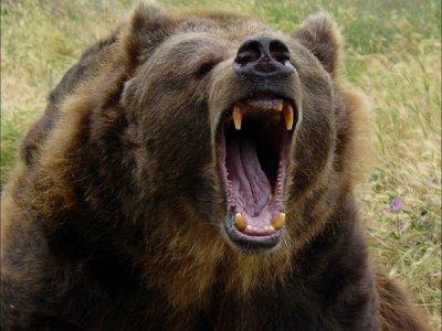 Как вести себя при встрече с медведем