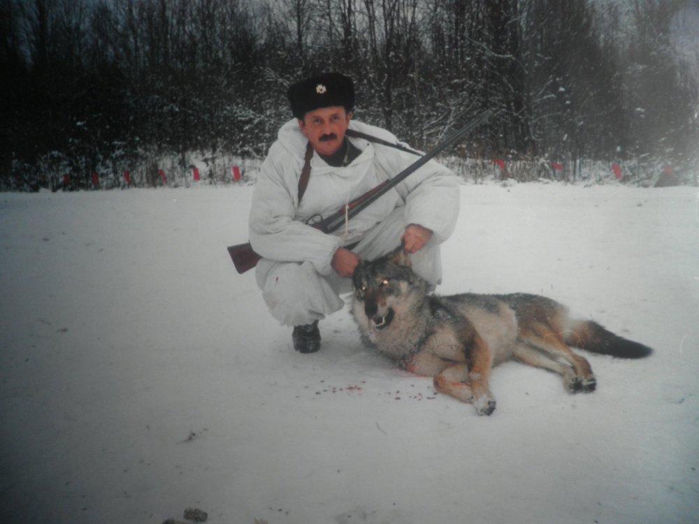 Первый волк отца.